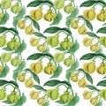 Ylang-ylang. Watercolor painting medicinal, perfumery and cosmetic plants. Wallpaper. Use printed materials, signs, posters, postc