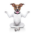 Yoga dog sitting relaxed with happy face Royalty Free Stock Photos