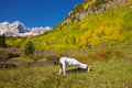 Yoga maroon bells in autumn a woman practicing the scenic colorado mountains fall Stock Images