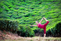 Yoga in tea plantations Royalty Free Stock Images