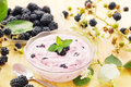 Yogurt with blackberries bowl of fresh Stock Images