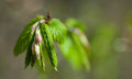 Yoing twig of tree birch in forest Royalty Free Stock Photo