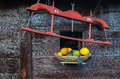 Yoke with xl and xxl mark and yellow and green pumpkins in wooden vessel against wooden wall Royalty Free Stock Photo
