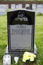Yomo toro grave queens new york june of master of the puerto rican guitar like instrument called a cuatro taken june at saint Royalty Free Stock Images