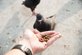 Yong man feed pigeons on Bangkok street Stock Photos