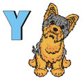 Yorkie and abc