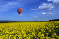 Yorkshire countryside hot air balloon drifting over field of oilseed rape in the harwardian hills in north in the northeast of Royalty Free Stock Image
