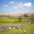 Yorkshire Dales with Dry Stone Wall Stock Images