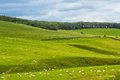 Yorkshire Dales, landscape in Summer, England Royalty Free Stock Photo