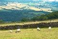 Yorkshire landscape Royalty Free Stock Photo