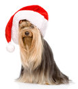 Yorkshire Terrier in red christmas Santa hat.  on white Royalty Free Stock Photo