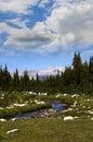 Yosemite national park a high mountain stream in california Royalty Free Stock Photo