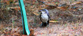 Are you my mommy baby mockingbird after a rain storm looks like he is asking park bench if it is his Stock Photo