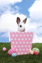 Young adorable little bunny rabbit in pink polka dot basket Royalty Free Stock Image