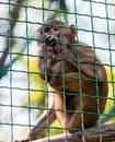 Young animal monkey baboon