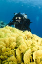 Young atractive girl scuba dives in clear blue water tech diver swims behind coral the red sea Stock Photography