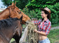 Young attractive cowgirl  feeding  horses in the farm Royalty Free Stock Photo