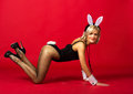 Young attractive girl in a bunny suit posing studio Stock Image