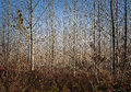 Young Autumn Forest Trees