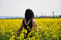 Young beautiful girl on yellow flower field Royalty Free Stock Photo