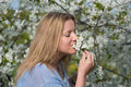 Young beautiful woman smelling blooming flowers of plum tree a Stock Photo