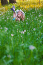 Young beautiful woman in spring field Stock Photography