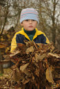 Young boy holding leaves Royalty Free Stock Image