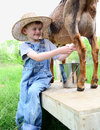 Young Boy milking Royalty Free Stock Photo