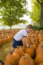 Young boy in pumpkin patch Stock Photography