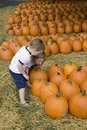 Young boy in pumpkin patch Stock Images