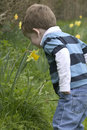 A Young boy smelling a daffodil Royalty Free Stock Images