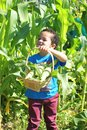 Young boy and sweetcorn Royalty Free Stock Photos