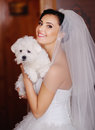 Young bride with a tiny dog adorable at home Stock Photography