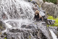 Young brown bear a on a rock at a waterfall Royalty Free Stock Image