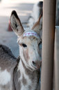 Young burro Stock Photo