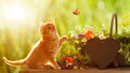 Young cat and butterfly with medicinal herbs Royalty Free Stock Photo