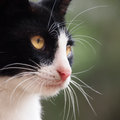 Young cat close up black and white Stock Image