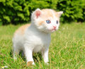 Young cat in the grass Stock Photos