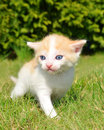 Young cat in the grass Stock Images