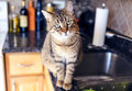 Young cat in the kitchen Stock Image