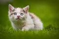 Young cat kitten in the grass Stock Image
