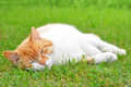 Young cat lying in the grass Royalty Free Stock Images