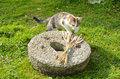 Young cat on old millstone in garden Stock Photos