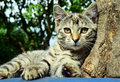 Young cat resting outdoors kitten leaning agains wood stump and relaxing in the sun female Stock Photo