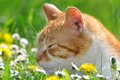 Young cat sleeping grass Stock Photo