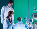 Young caucasian forensic scientics two scientist studying an old human skull in a laboratory Royalty Free Stock Images