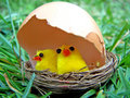 Young chicken in the nest Stock Images