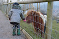 Young child feeding grass to a brown and white miniature Shetland pony Royalty Free Stock Photo