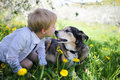Young Child Kissing Pet German Shepherd Dog Outside in Flower Me Royalty Free Stock Photo