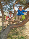 Young children climbing in a tree boy and girl pine on sunny day Stock Images